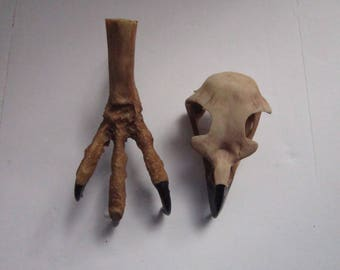 Eagle Skull & Eagle  Foot Claws Talon Resin Educational Crafts Replica