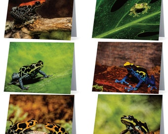 Assorted Frog blank note cards - pack of 6 different poison dart frogs, Gifts for nature lovers, gifts for frog lovers, gifts for frog fans