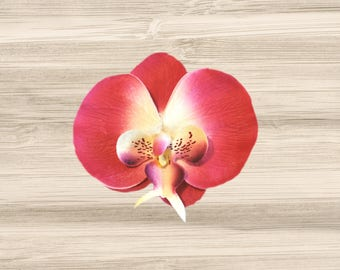 Large Hot Pink Phalaenopsis Orchid Hair Clip