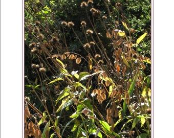 Sunlit Prairie Garden