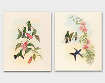 Hummingbird Prints, Bird Wall Art (Antique John Gould Book Plate Illustration) Vintage Home Decor - Set of 2 SALE