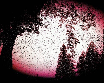 Through the Glass, Rainy Night Drive, Sunset, Summer, Black Trees, Nature Photography, Print, Landscape, Thunderstorm, Surrealism, 8x10, 5x7