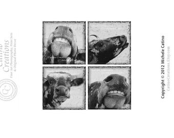 Funny Cows, Nurser Decor, Barnyard Theme, Toddler Room Art, Smiling Cow Set, Grinning Cows, Sepia Toned Mooing Cow Photo Set of Four