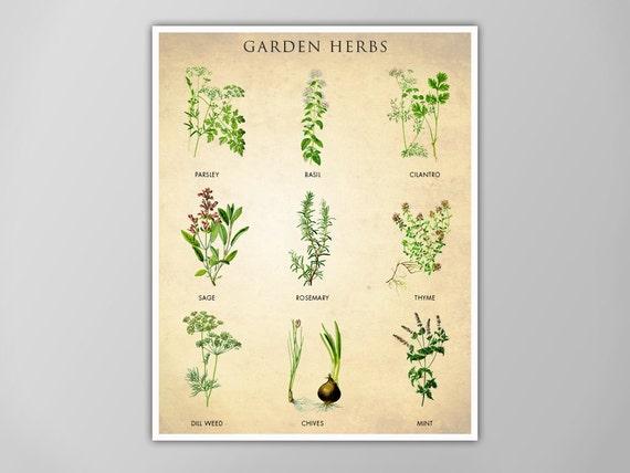 Garten Kräuter Diagramm Küche Druck Kunst für Küche Kräuter