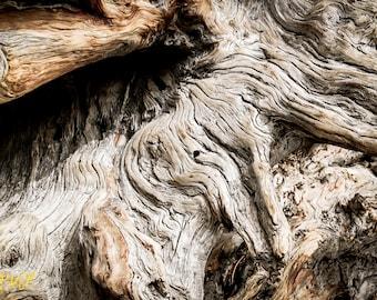 Dead tree nature photo print