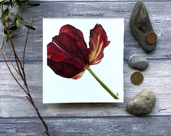 original realistic red parrot tulip flower watercolor art painting wall art maroon delicate floral botanical illustration small aquarelle