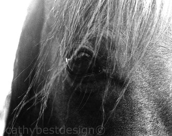 """Morgan Horse Eye Black and White Fine Art Photograph """"Mirror to the Soul"""""""