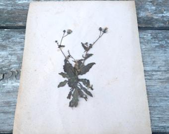 Antique des années 1900 herbier Français sans nom