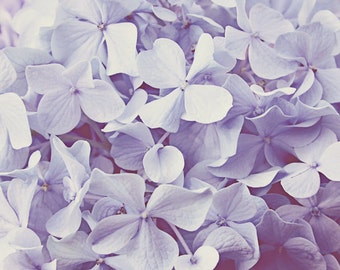 hydrangeas photography nursery art lilac lavender wall art girls room decor floral wall decor cottage chic floral bedroom art flower photo