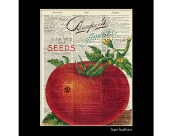 Vintage Dictionary Art Print - Tomato Gardening - Dictionary Page - Book Art Print  - Home Decor No. P95