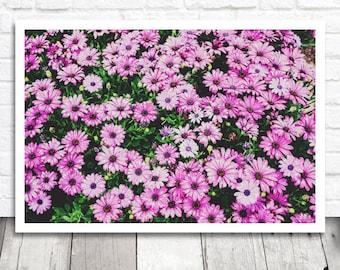 Purple Flower Field, Floral Print, Floral Photo Print, Floral Photography, Flower Printable Art, Digital Download, Digital Print, Floral Art