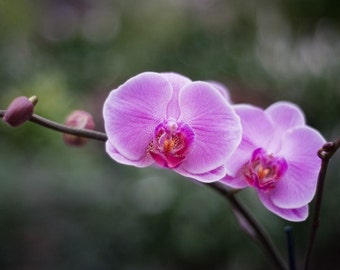 Photo Note Card / Purple Orchid Flower
