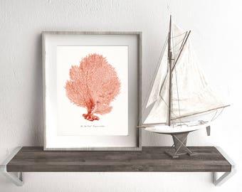 Coastal Décor Vintage Sea Coral Giclee Print Sea Fan – Colors: Sun-kissed, Bright Coral