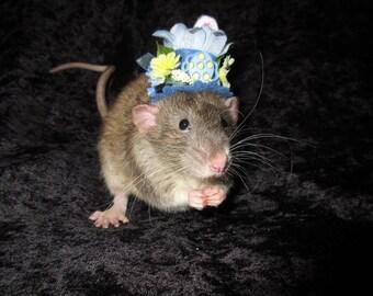 Easter Spring Fancy Rat Hat