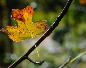 Autumn Leaf Nature Photograph, Golden Yellow Fall Leaves Photography, Horizontal Wall Art, Leaf Home Decor, Fine Art Nature Photo Print
