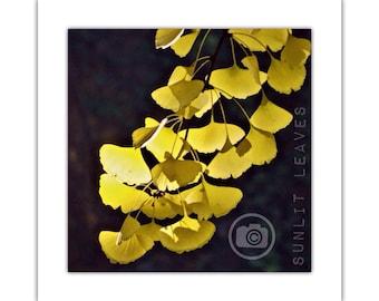 Sunlit Leaves | Photographic Print | Autumn Leaves | Tree