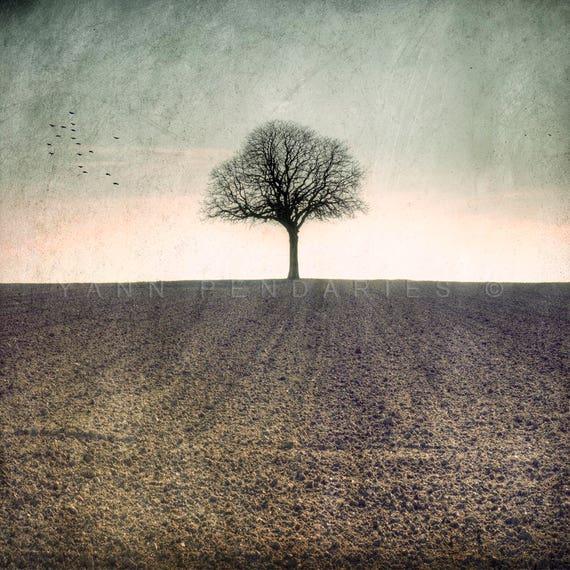 Landscape photography, tree decor, Country Decor, Photography French Country, Nature photography, Fall decor, Rustic Wall Art