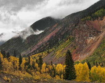 Aspen Trees, Fall Aspen Print, Photo of Autumn Leaves, Misty Mountains, Trees Print, Golden Colors, Aspen Photography, Fall Autumn Scenery