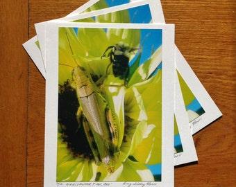 Mr. Grasshopper & Ms. Bee