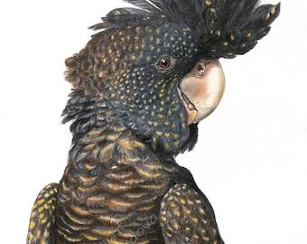 Black Cockatoo art print - Australian Bird giclee Parrot Print, Modern Contemporary Wall Art, Black and Yellow Nature Art, Australian Art