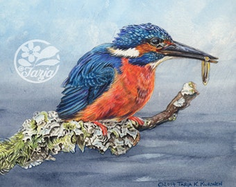 Kingfisher, Giclee print of an original Watercolor and Color Pencil Illustration.