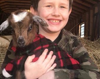 Goat Etsy
