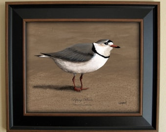 Piping Plover Giclee Print by Tim Campbell