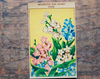 Original Vintage Flower Seed Label, Lithograph, French, Forget Me Not, New Old Stock