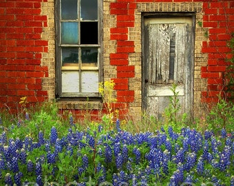 Beauty and The Door- 11 x 15 signed original photograph - Texas Wild Flowers Landscape, Award Winner
