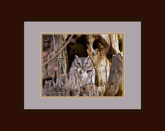 The wise ole owl, Original Fine Art Photography, matted and framed