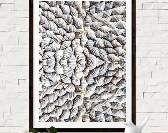 Seashells Art Print - Ocean Art Sea Art Beach Art - Coastal Life Shell - Beach House Decor Bathroom wall art - Large Digital Wall Decor