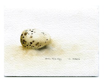 Arctic Tern Egg Original Art Card - Original Hand Painted Watercolor