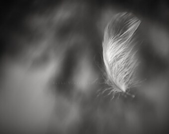 """black and white photography, feather, nature, inspiration, monochromatic wall art - 16x20, 11x14 or 8x10 photograph, """"Hope"""""""