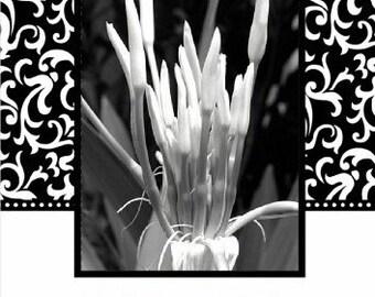 Elegant Fleur-de-lis Photo Christmas Cards by Denise Sloan