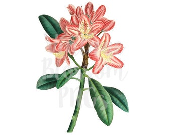 Pink Flower Clipart for Invitations, scrapbook, Card making, collage, prints - 1309
