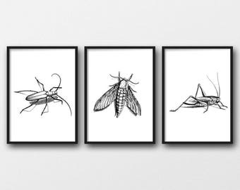 Set of 3 A4 Insect Prints