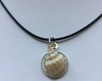 Sea Shell in Sand Necklace