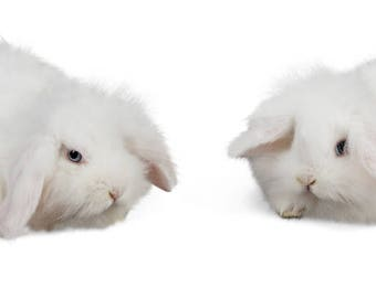 Bunny overlay  - Two White Bunnies digital download