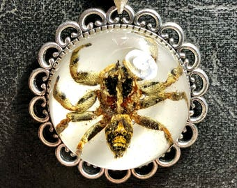 Furry Jumping Spider Real Arachnid Specimen in Resin Under Glass Bubble Dome Clear Floating Necklace Vulture Culture