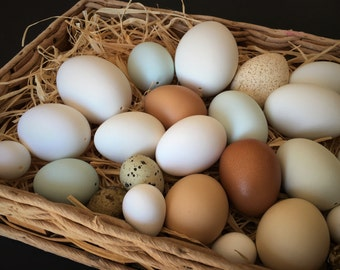 Two Dozen Blown Eggs, Variety of Eggs for Display, Home Decor, Photography, Eggs for Pysanky, Etching, Carving or Other Craft Projects