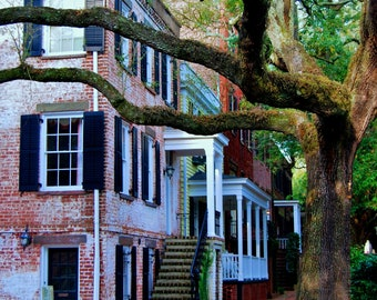 Travel Photography - Savannah's Finest - Architectural, Southern, Georgia, Southeast, Tree, Nature, Fine Art Photography