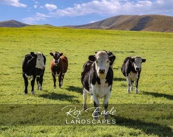 Curious Cows 6 x 8 Photo Block
