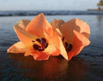 Tropical Hibiscus on Sand - Photo Print Canvas Wood Acrylic Metal - 6009