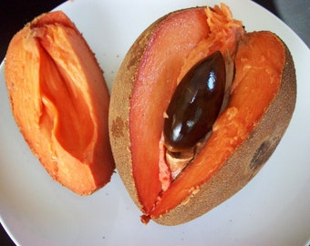 EXTREMELY RARE * Pouteria Sapota * Mamey Sapote * Zapote Rojo * 1 Huge Seed *