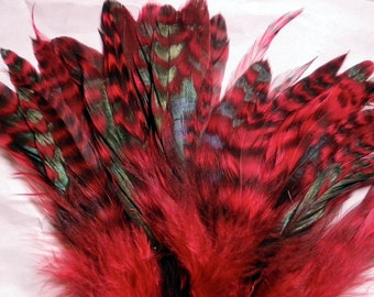 Red Chinchilla Schlappen Feathers 6 to 8 inches