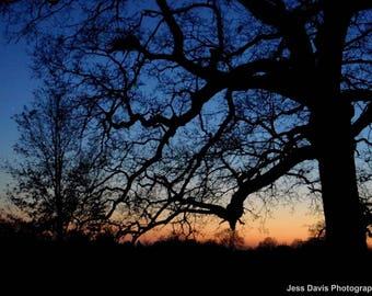 Tree silhouette fine art photography print: sunset, wall art, nature, landscape