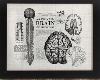 Anatomical Brain Vintage Art Print | Neuron Nurse Neuroscience Medical Doctor Nursing Anatomy Poster Wall Art Science