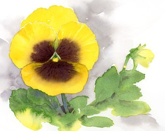 Yellow Brown Pansy - Watercolor