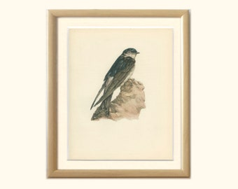 House Martin, Vintage Bird Print, Ornithology, Natural History, DEM/1959/129, Country Cottage Decor, Rustic Cabin Decor, 8 x 10