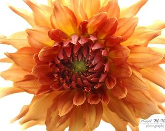 Flower photo Greeting Card, Orange Dahlia, 5x7 greeting card, Nature photography, white and orange, Fine art photography Card